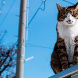 谷根千はこんな猫たちにも会えるかも