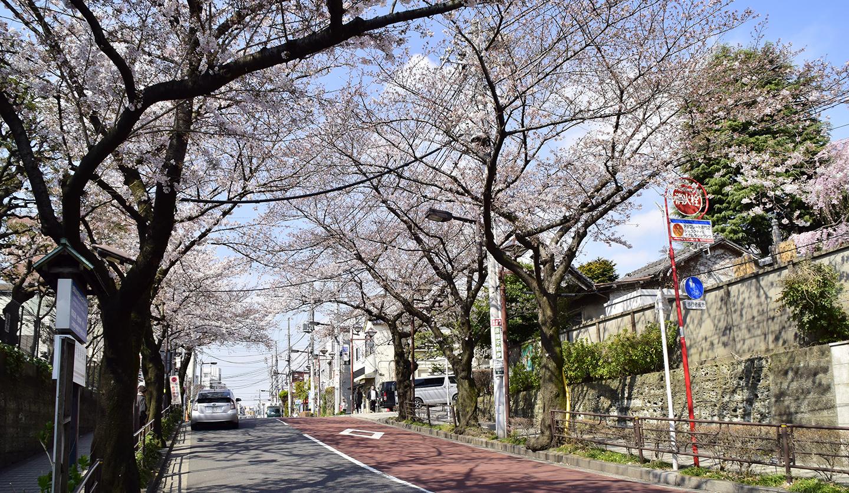 sakura-spot-gotenzaka
