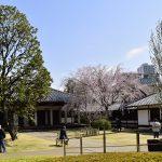 sakura-spot-tennouji